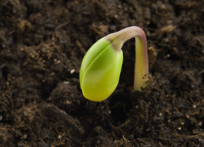 Seed of Potential